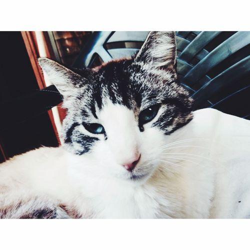 La vie est faite de surprise. 🐈🐈 Cat Photography Blue Eyes