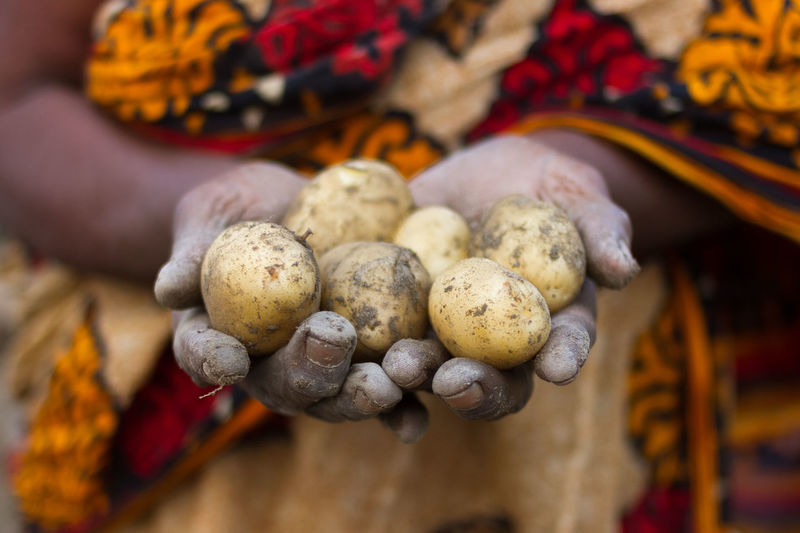 Close-up of woman holding potatoes