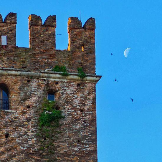 Landscape Moon Birds EyeEm Best Shots EyeEm Gallery Verona Italy Tower Eyemphotography Sky