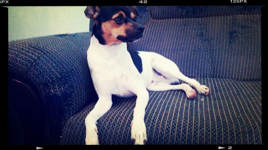 lindoooo I Love My Dog Thorbebelindo