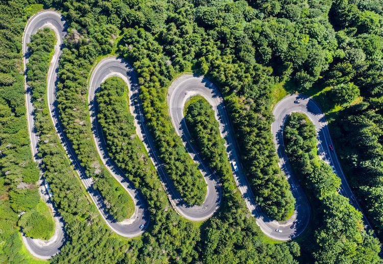 High angle view of plants by road against trees