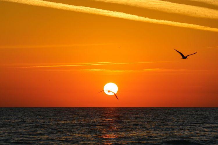 Sea Sunset Sky Water Horizon Over Water Scenics - Nature Orange Color Animal Themes Horizon Beauty In Nature Vertebrate Sun Bird Animal Animal Wildlife Tranquil Scene Flying Animals In The Wild Tranquility No People Outdoors