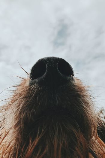 Nose Close-up Low Angle View Outdoors Domestic Animals