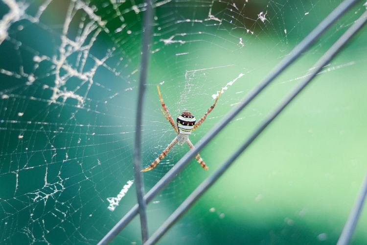 Spider Man or