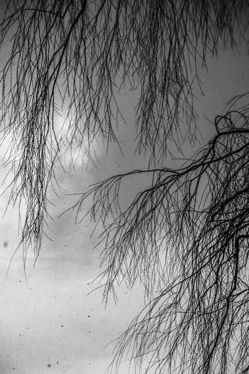Bare Tree Beauty In Nature Blackandwhite Branch Day Nature No People Outdoors Scenics Sky Tranquility Tree Water Winter
