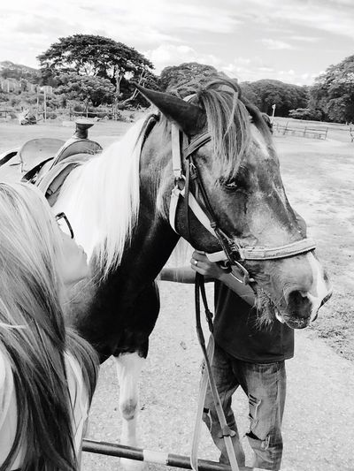 For The Love Of Black And White Horses