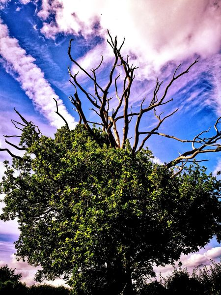 Tree Sky Cloud - Sky Nature Low Angle View Beauty In Nature Outdoors No People Day Branch Scenics Summer EyeEmNewHere Beauty In Nature Summertime Trees And Nature Trees Of Eyeem Trees And Clouds Trees And Leaves Trees Are Beautiful The Great Outdoors - 2017 EyeEm Awards