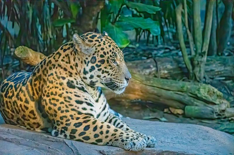 Amazon Animal