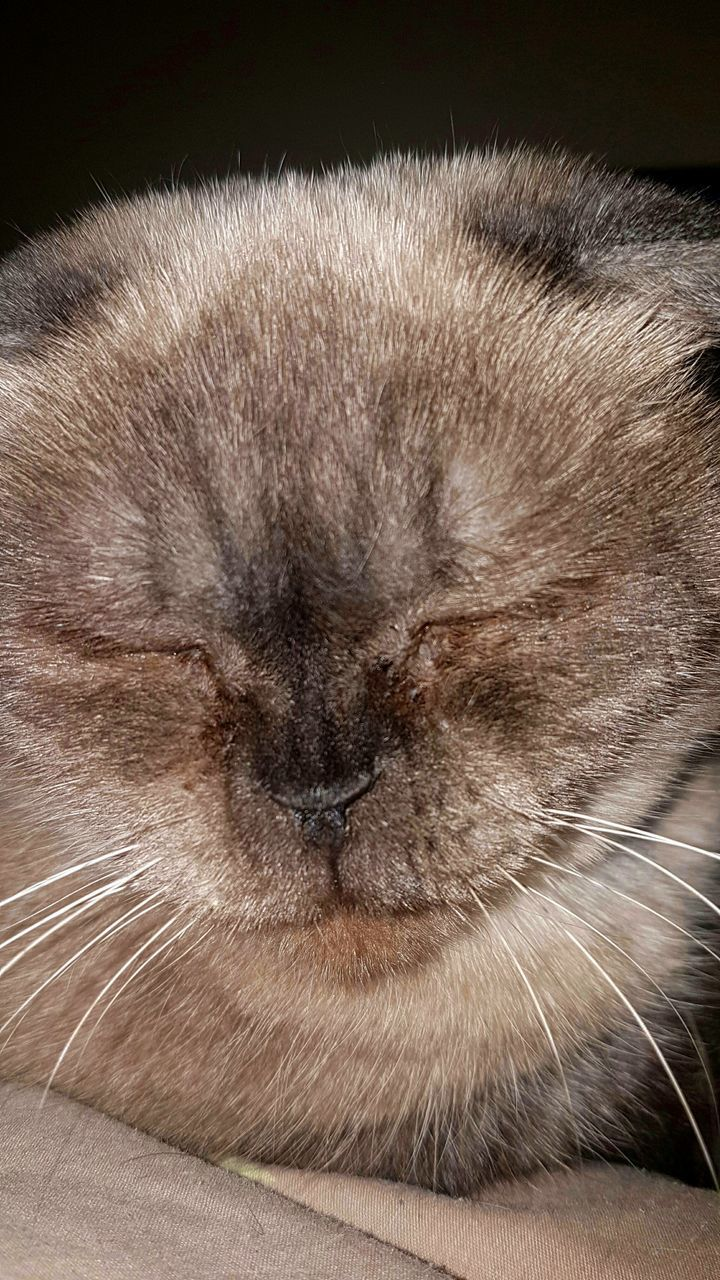one animal, pets, domestic cat, animal themes, mammal, domestic animals, whisker, feline, no people, close-up, day, indoors