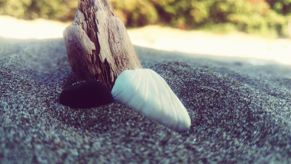 New Zealand Close-up Outdoors Day No People Summer Christmas Beach Sand Driftwood Seashell Live For The Story