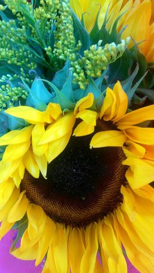blumen. photo by Shell Sheddy Shellsheddyphotography Sheshephoto The Great Outdoors - 2018 EyeEm Awards Flower Head Flower Yellow Petal Backgrounds Full Frame Sunflower Leaf Close-up Plant In Bloom Blooming Plant Life My Best Photo