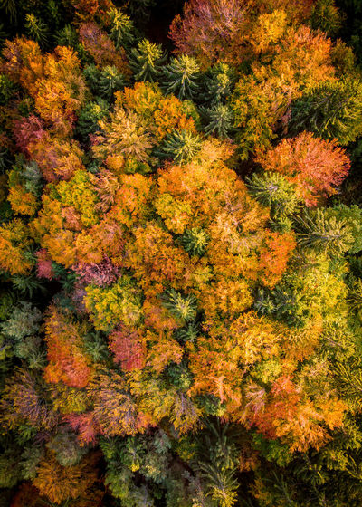 High angle view of flowering plants and trees during autumn