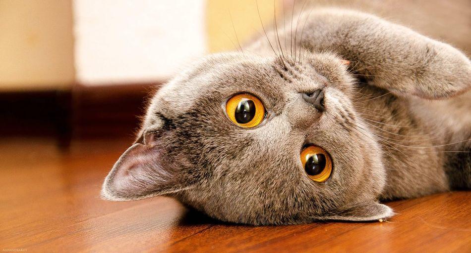 cat Animal Photography Cat♡ Cats Of EyeEm Cats 🐱 Cat Eyes