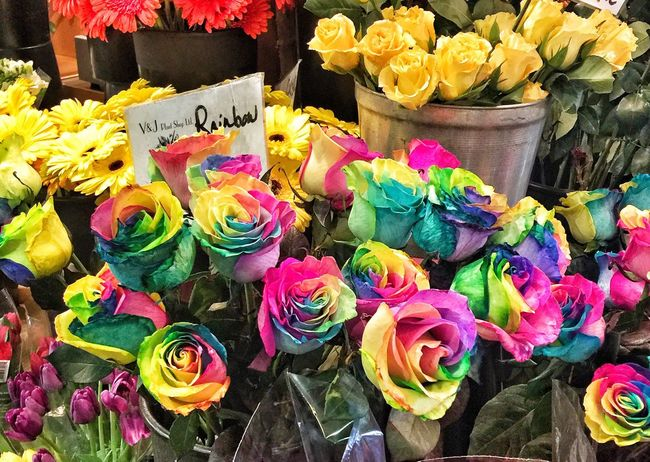 Roses Rainbow Roses Flowers Flower Collection Flower Photography Multi Colored Colorful Color Palette Flower Rose - Flower Rainbow Colors Color Explosion Rainbow Colors Flowers,Plants & Garden Flowers_collection Flowerstagram