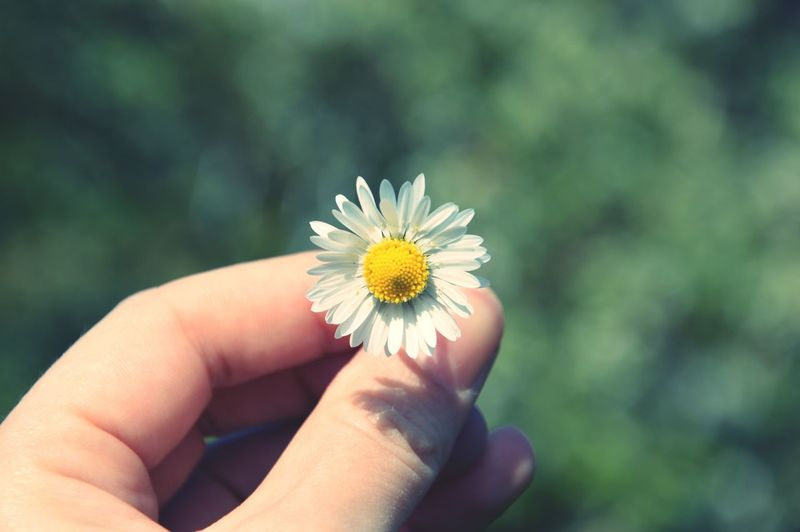 Close-up of cropped hand holding white flower