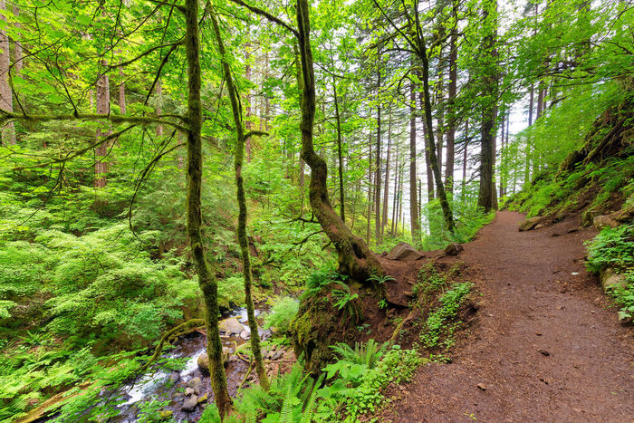 Trail to Horsetail Falls in the Columbia River Gorge near Portland, Oregon Branch Columbia Creek Environment Forest Green Horsetail Horsetail Falls Landscape Multnomah Natural Nature Oneonta Oregon Pacific Northwest  Portland Portland, OR River Rivergorge Scenery Stone Tree United States Water Waterfall