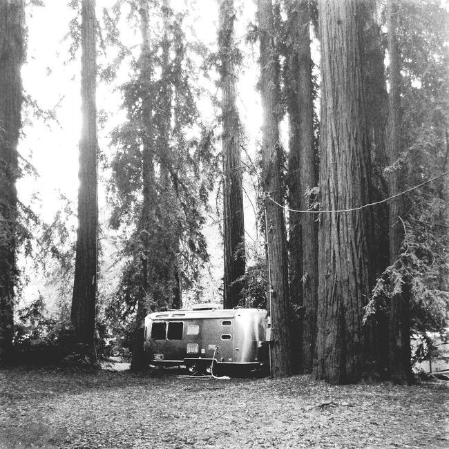 Camping in Bigsur . Beautiful Nature California Airstream