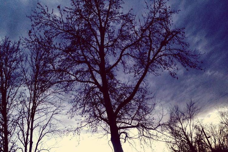 Tree Sky Nature Low Angle View Silhouette Bare Tree Branch Beauty In Nature No People Winter Cold Temperature Cold Days Outdoors Scenics Treetop Day