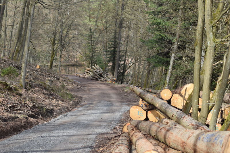 21.04.2018 April April2018 Direction Firewood Forest Land Long Nature No People Outdoors Road The Way Forward Tree Wood Wood - Material WoodLand