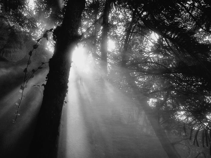 Sun Fog Trees Magical Magic Magic Forest Sunlight Sunlight Through Trees