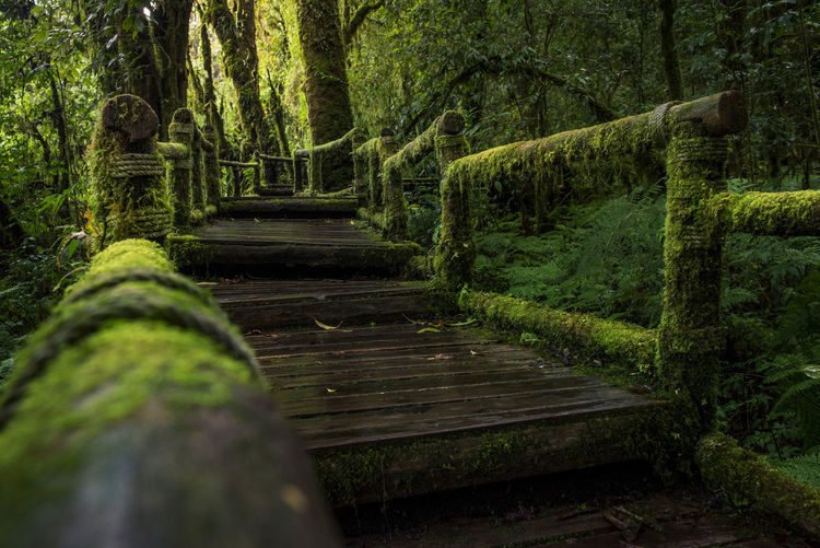 Close-up of boardwalk in forest