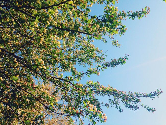 Spring Into Spring Nature Trees Green Sky Flowers Vscocam Nature's Approach