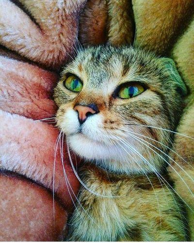 Cat♡ MyPhotography MIAcat Taking Photos