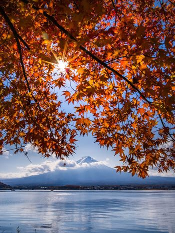Autumn Leaf Beauty In Nature Scenics Tranquil Scene Nature Lake Landscape No People Mountain Japan Colorful View Autumn Foliage Medium Format Autumn Colors Autumn Leaves Fuji Mt Fuji Colorful Nature Maple Leaves Autumn🍁🍁🍁 Mt Fuji, Japan Foliage Autumn Beauty In Nature