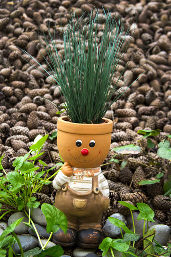 Backgrounds Chipollino Cone Cones Fir Cones Flower Pot Green Color Growth Nature Plant Toy