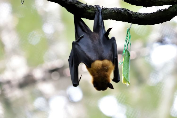 Wildlife and forestry Animal Animal Themes Animal Wildlife Animals In The Wild Bat - Animal Bird Bird Feeder Branch Close-up Day Focus On Foreground Growth Hanging Nature No People One Animal Outdoors Plant Tree Vertebrate