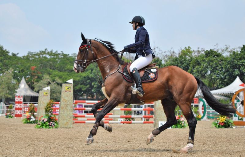 Horse Riding Animal Themes Outdoors Sport Girls Horses Equestrian Horse Riding Animals Be Brave