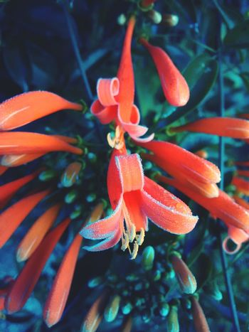 EyeEmBrasil Nature Flowers