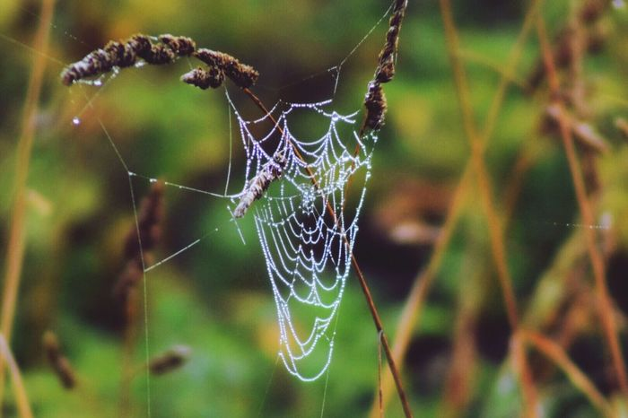What's On The Roll Oregon Beauty In Nature No People EyeEm Nature Lover Eye4photography  Dewy Spiders Web