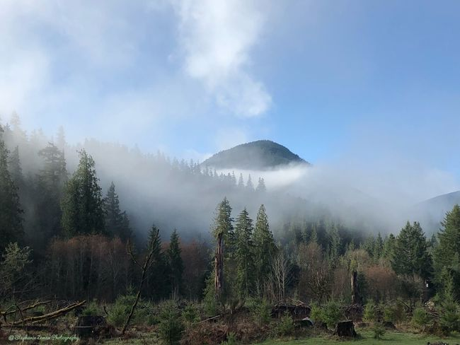 Natural picture, no touch ups of Morning Mountain Fog Mountain Plant Tree Beauty In Nature Tranquil Scene Tranquility Fog Mountain Scenics - Nature Sky Environment Land Cloud - Sky Nature Non-urban Scene Landscape Day Outdoors