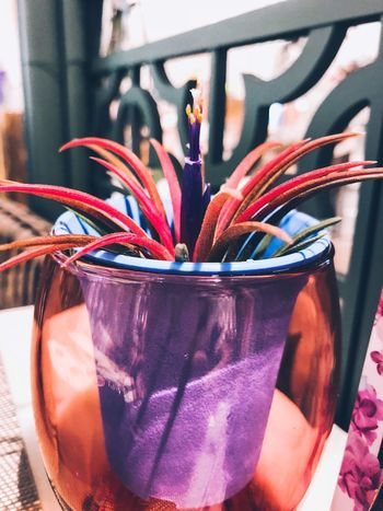 Close-up No People Indoors  Plant Glass Nature Potted Plant Multi Colored Flower Vase Flowering Plant Glass - Material Table Straw Drinking Straw Day Focus On Foreground Freshness Still Life