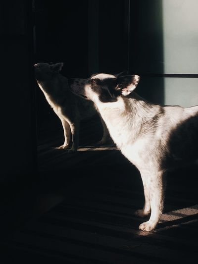Cat sitting in the dark