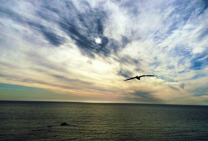 I Love My City Bird In Flight Capture The Moment Enjoying Life Eyem Nature Lovers  Skylovers Sea And Sky Clouds And Sky Reñaca Beach , Chile For My Friend