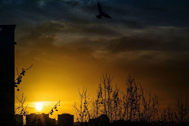 Bonsoir et bon week-end. Beauty In Nature EyeEm Best Shots Eyeemphotography Sunset Flying Bird Cityscape City Life City Cloud Cloud - Sky Sunset Night Sky