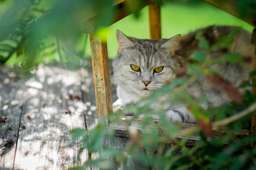 Sitting Animal Animal Themes Bird Feeder Cat Cat House Day Domestic Domestic Animals Domestic Cat Feline Looking At Camera Mammal Nature No People One Animal Pets Plant Plant Part Portrait Relaxation Selective Focus Vertebrate Whisker Yellow Eyes