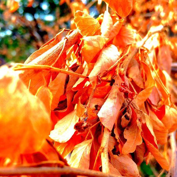 The Leaves Change Colors Leaves Wood Thailand Bangkok