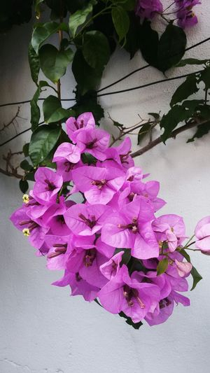 Flower Vertical