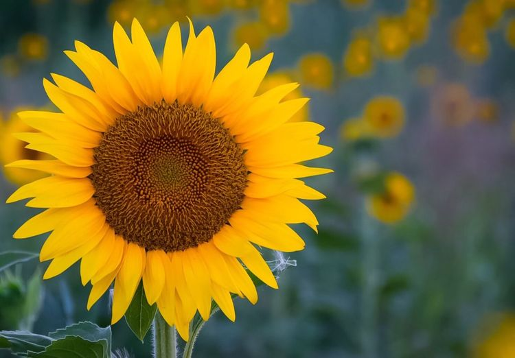 Summer Flower Yellow Sunshine Summer Colors Colorful Life Love Nature Paint The Town Yellow