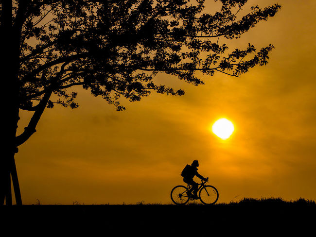 bicycle man with sakura tree silhouette Silhouette Shadow Lifestyles Tree Sakura Cherry Blossom Nature Sundown Evening Bicycle Riding Exercising Sky Glod Grass Trunk Black Hobby Space Relaxing Clam Light Flower Warm Feeling