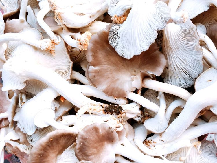 Mushroom Backgrounds Textured  Texture White Brown Mushrooms 🍄🍄 Mushrooms Mushroom High Angle View No People Animal Themes Day Nature Food Close-up Freshness
