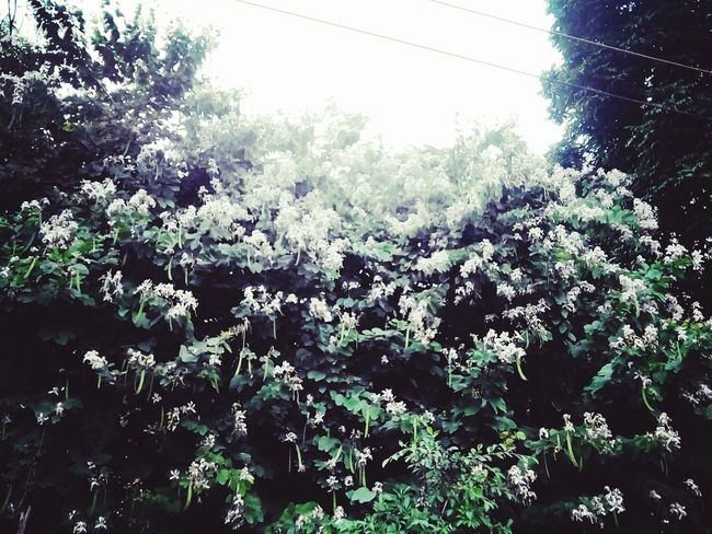 GoodMorning⛅ Flowers Green Color Tree 😄