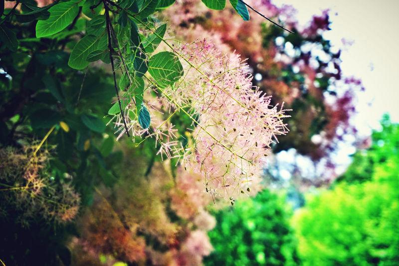 Leaves Nature Flowers,Plants & Garden Love♥
