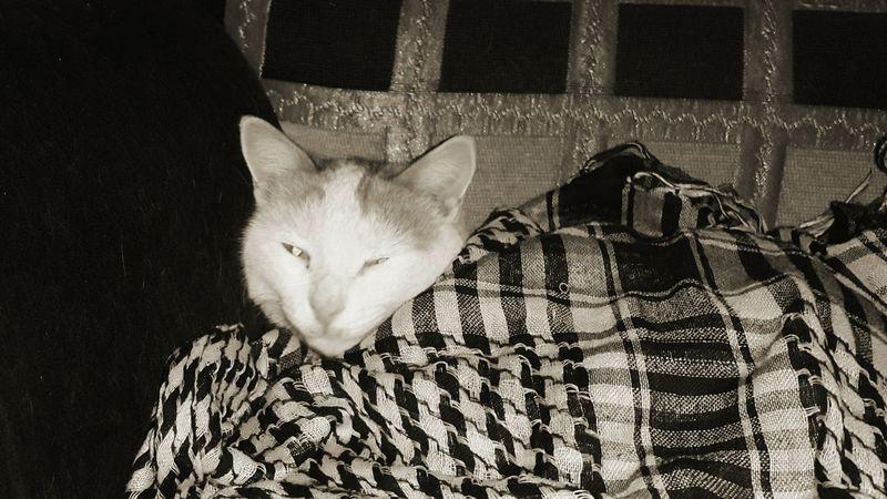اللاذقية Contryside Latakia  Cat Animals