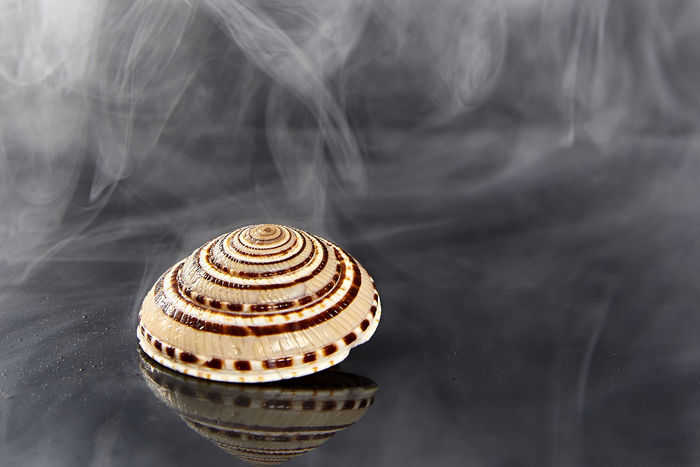 Animal Themes Close-up Day Freshness Nature No People Outdoors Shell Smoke - Physical Structure Swirl Water