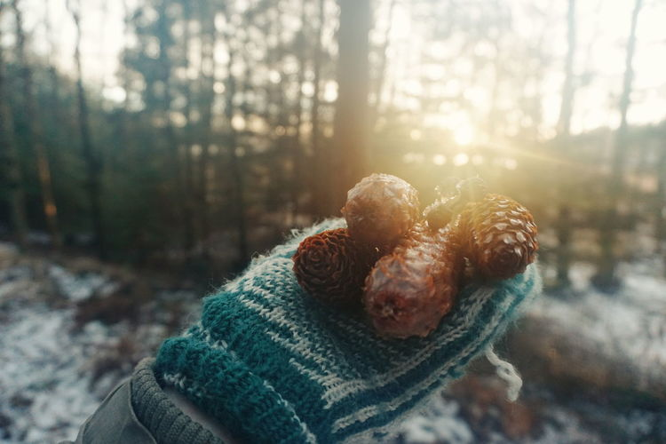 Cropped Image Of Hand Holding Pine Cones In Forest During Winter