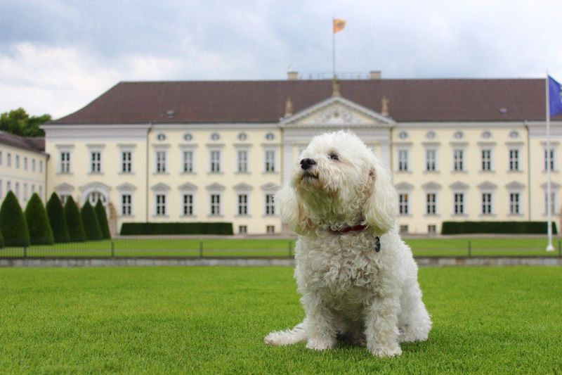 View of a dog looking away against building
